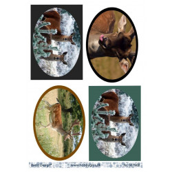 Florella Vlinders - Lavendel