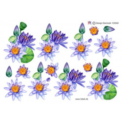 Joy Cut/Emb - Blooming Cactus - 6002/1416